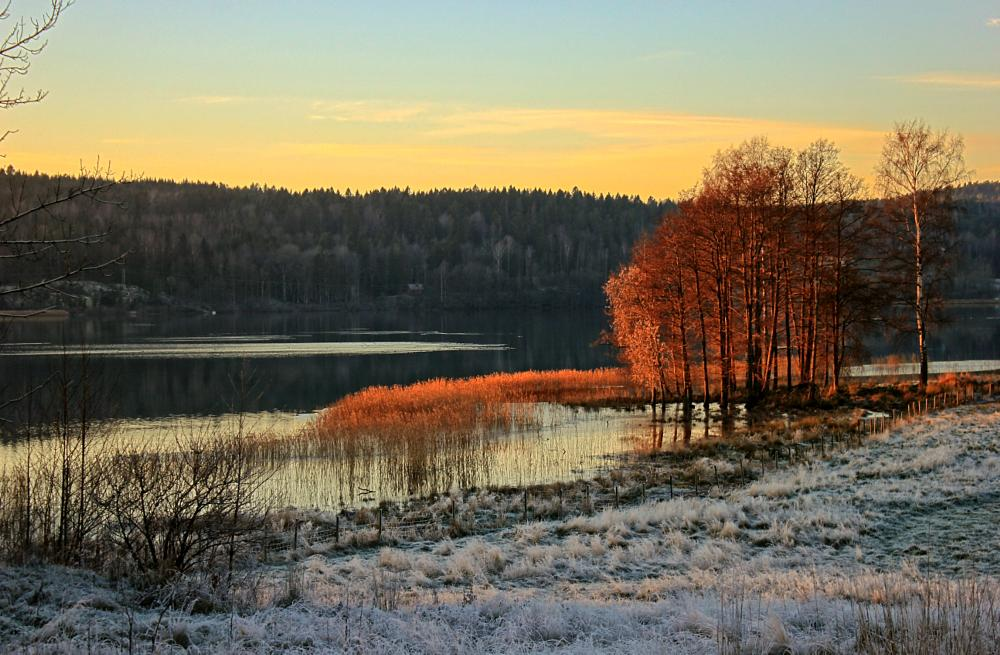 Photo in Landscape #autumn #winter #trees #lake #cold