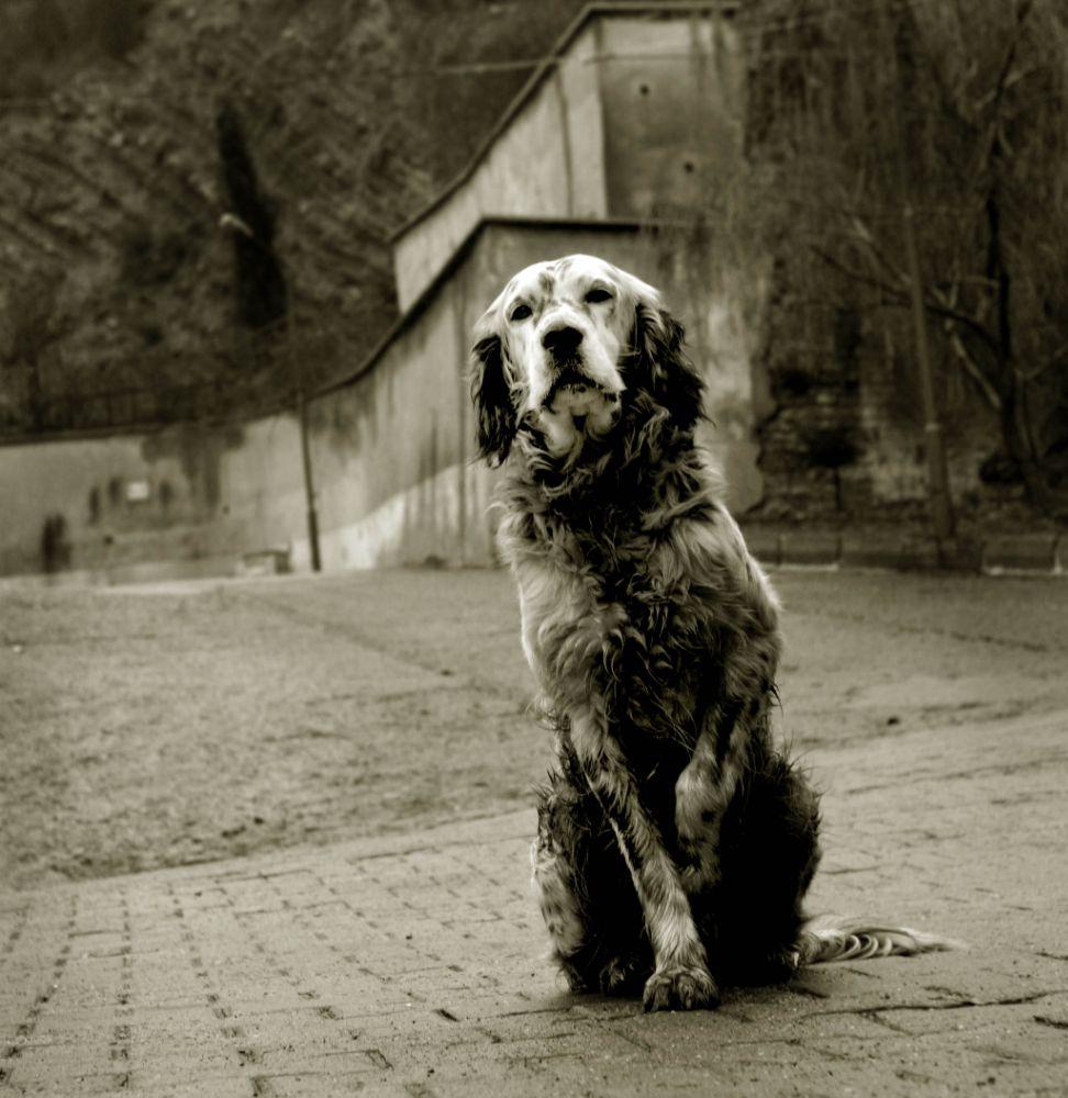 Photo in Animal #dog #street #pet #waiting #monochrome