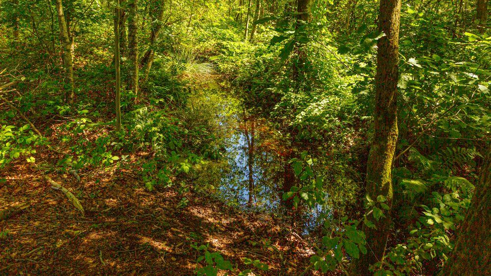Photo in Random #natuur #reflectie #bos