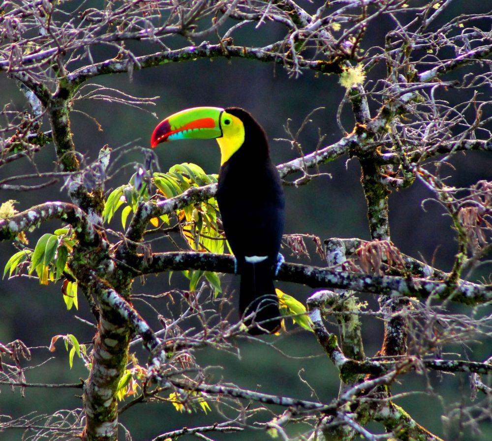 Photo in Architecture #birds #nature #animal