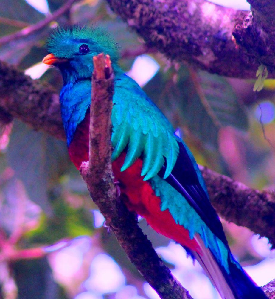 Photo in Animal #birds #nature #birdwatching