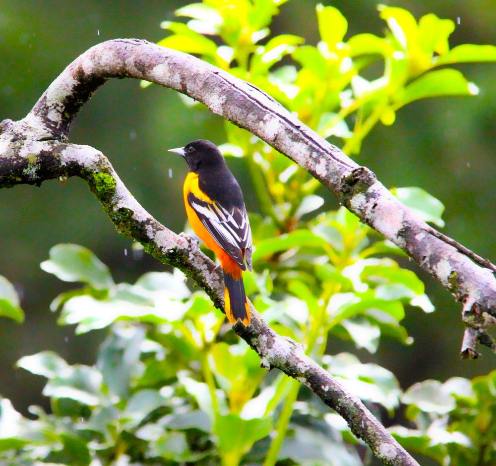 Photo in Animal #animal #nature #travel