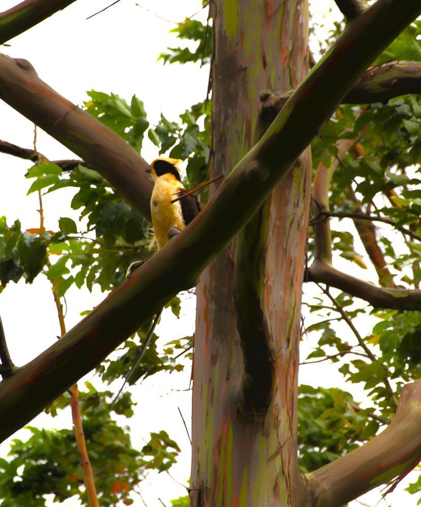Photo in Animal #animal #birds #nature #travel