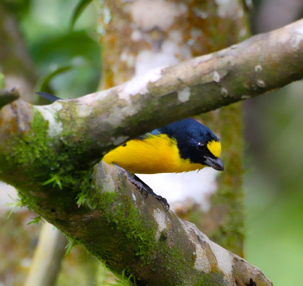 Photo in Animal #animal #birds #travel #nature #wild life