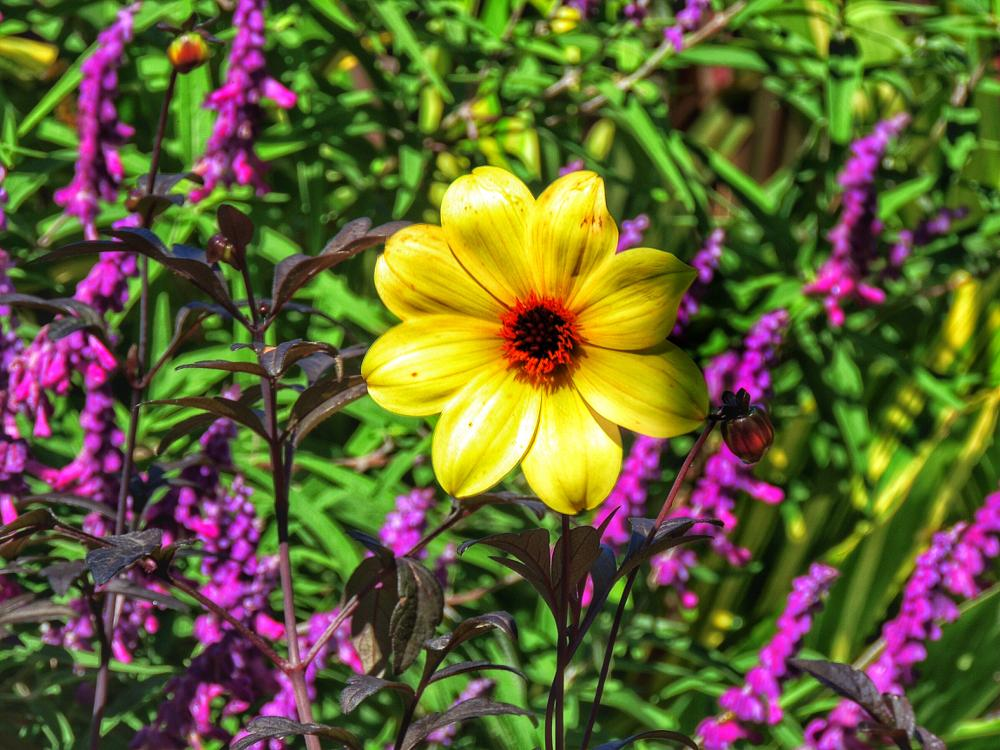 Photo in Nature #yellow #flower #purple