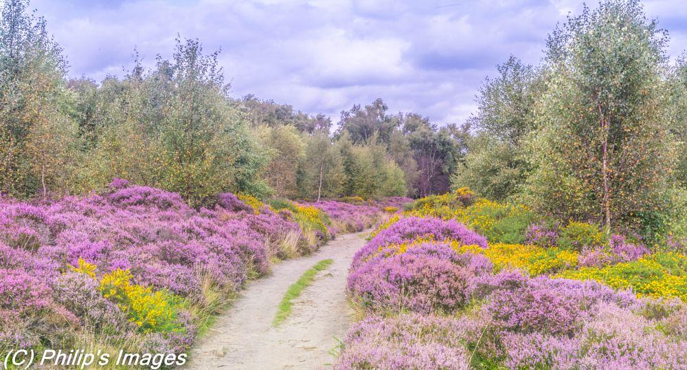 Photo in Landscape #derbyshire #peak district #colour #stanton moor #landscape