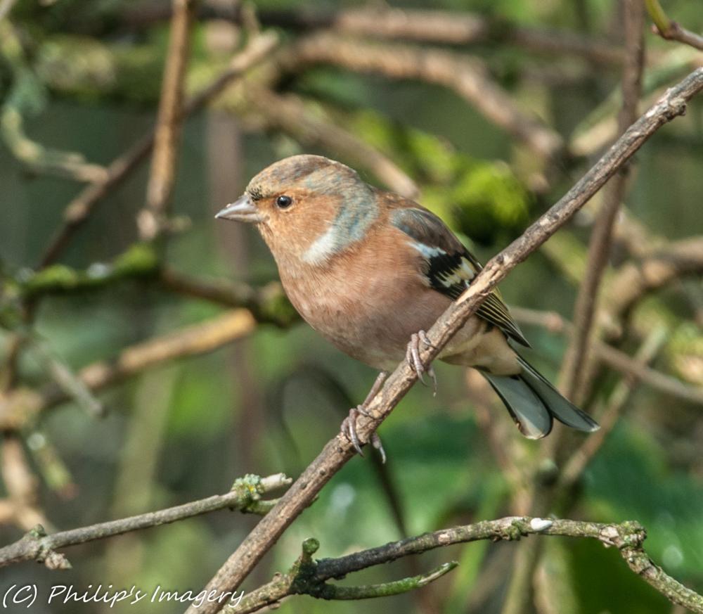 Photo in Animal #wildlife #birds