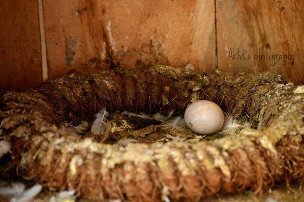 Photo in Animal #animal #bird #photography