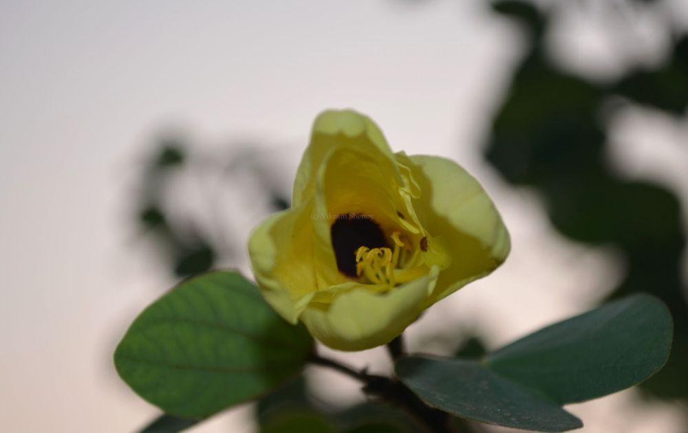 Photo in Macro #macro #flash #flower
