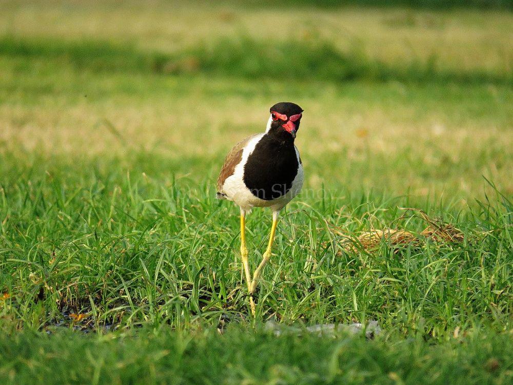 Photo in Animal #nature #bird #walk