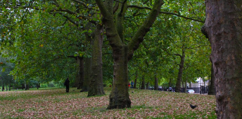 Photo in Nature #trees #nature #london