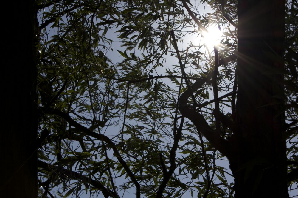 Photo in Nature #flare #branch #trees