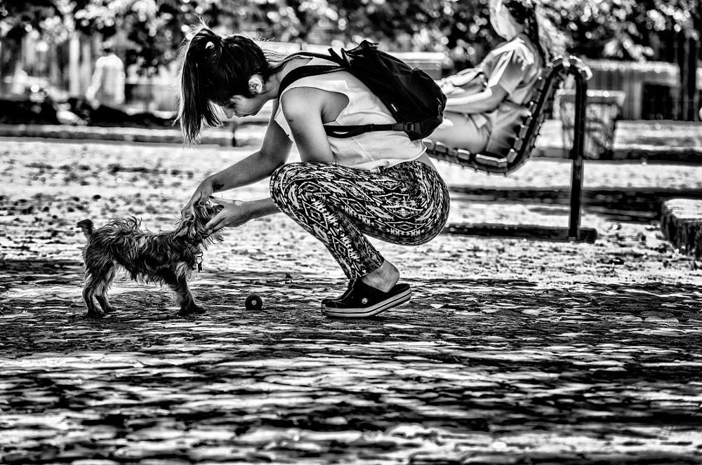 Photo in Street Photography #black and white #girl #dog #city park #play