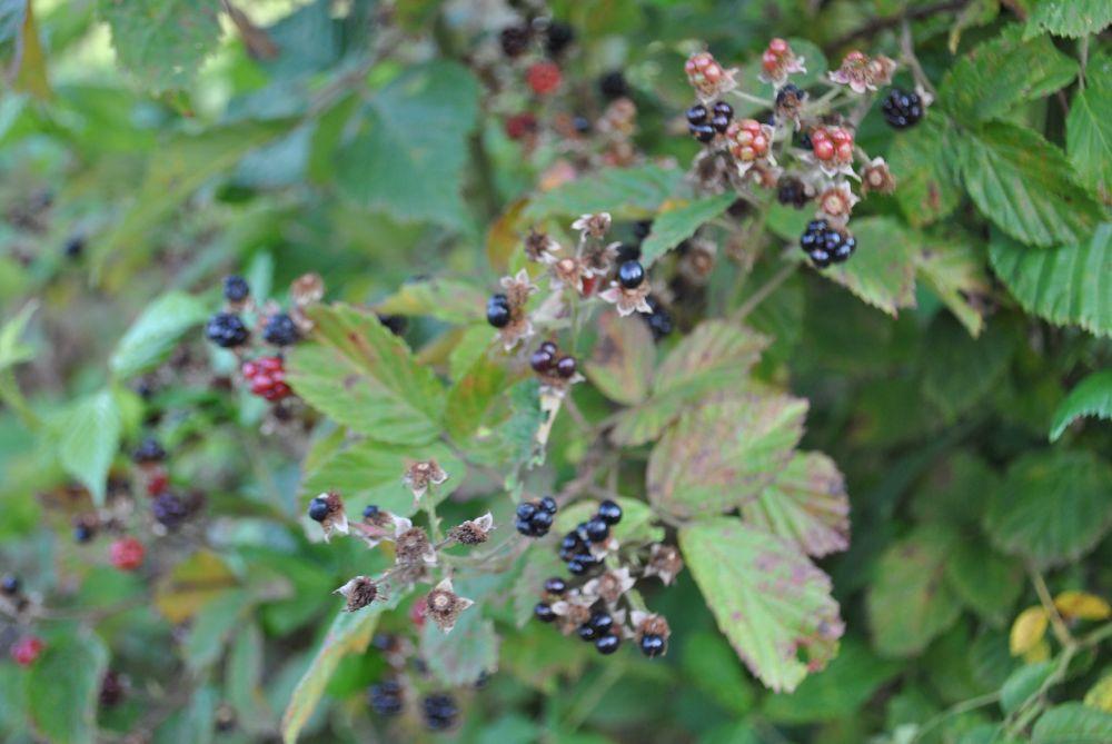 Photo in Nature #nature #berries #food
