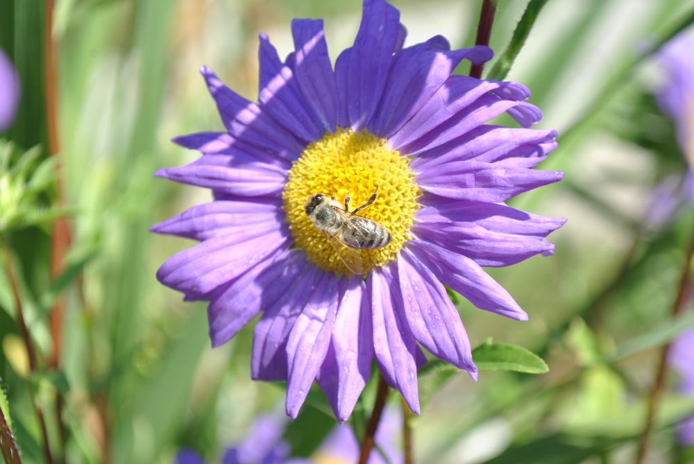 Photo in Nature #flower #nature #bee