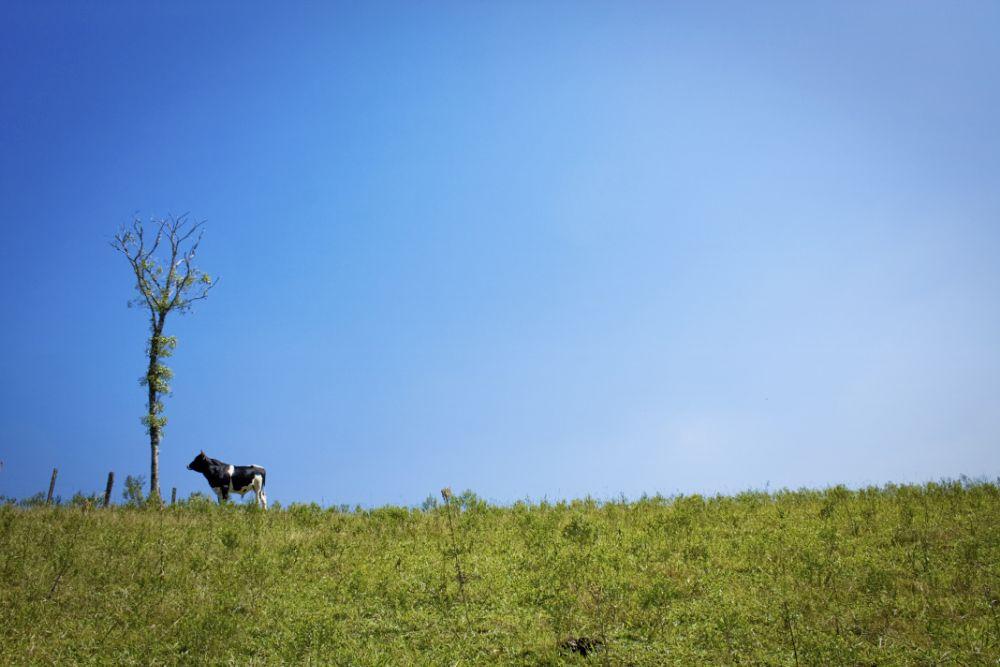Photo in Landscape #landscape #cow #alone #brazil