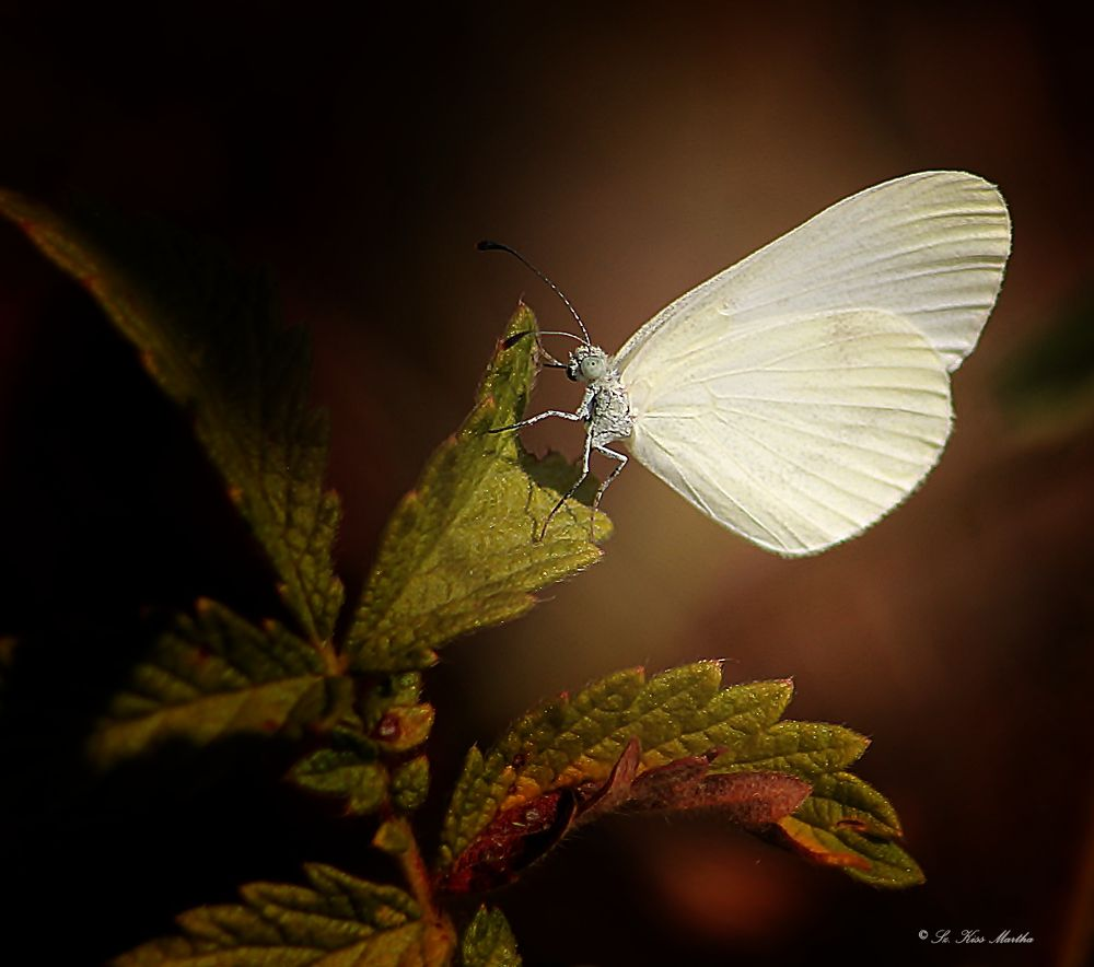 Photo in Nature #nature #butterfly #macro #ypa2013