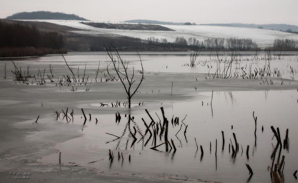Photo in Nature #nature #winter #landscape