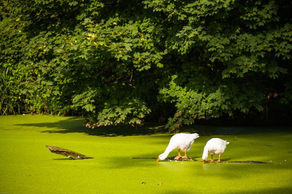 Photo in Still Life #ducks #nature #stilleven