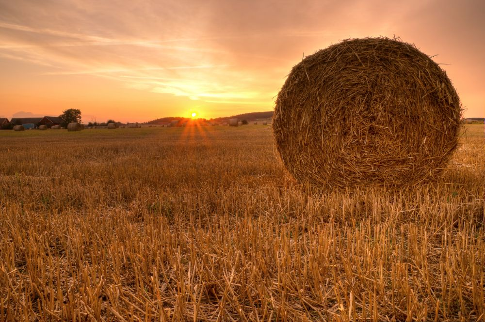 Photo in Landscape #sunset #straw #countryside