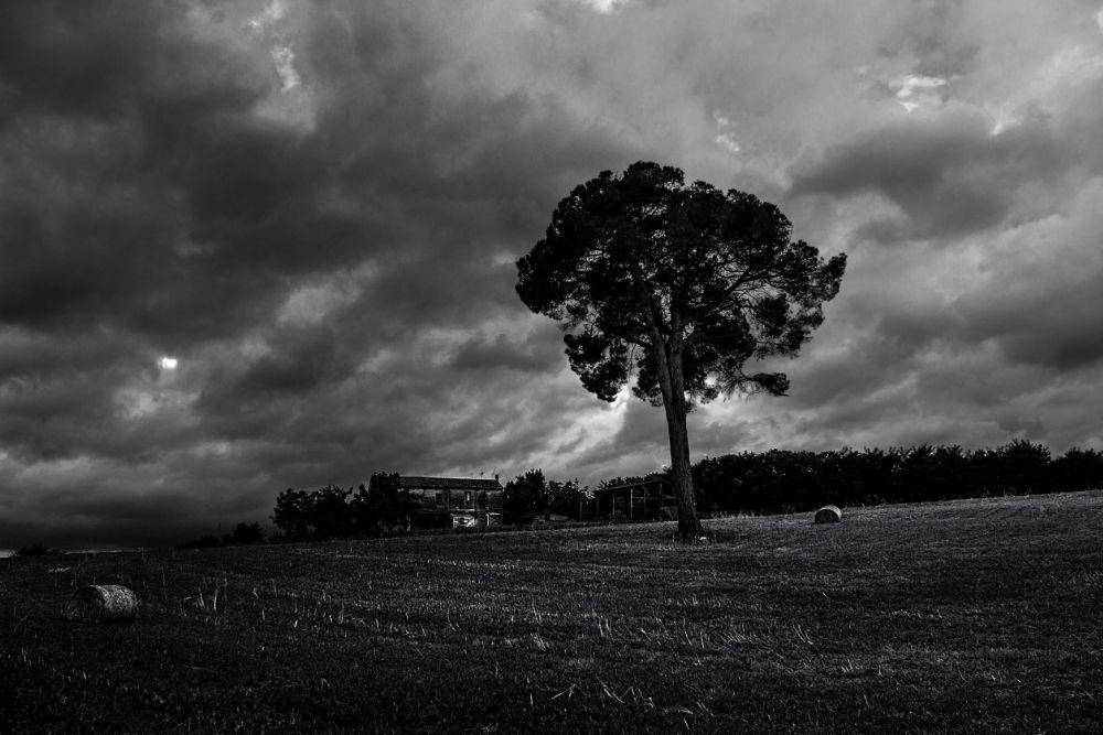 Photo in Black and White #campania #italy #black and white #clouds #farm #rain #tree #hayricks