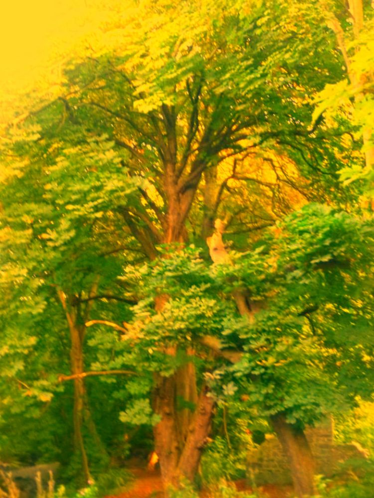 Photo in Abstract #art #trees #wales