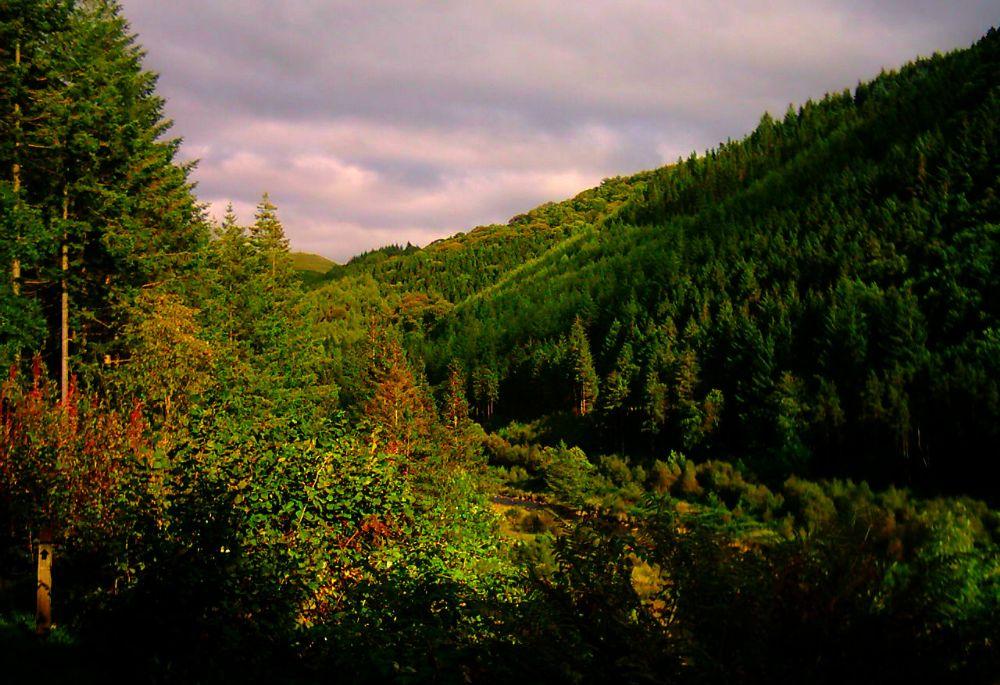 Photo in Landscape #wales #the hafod estate #nature