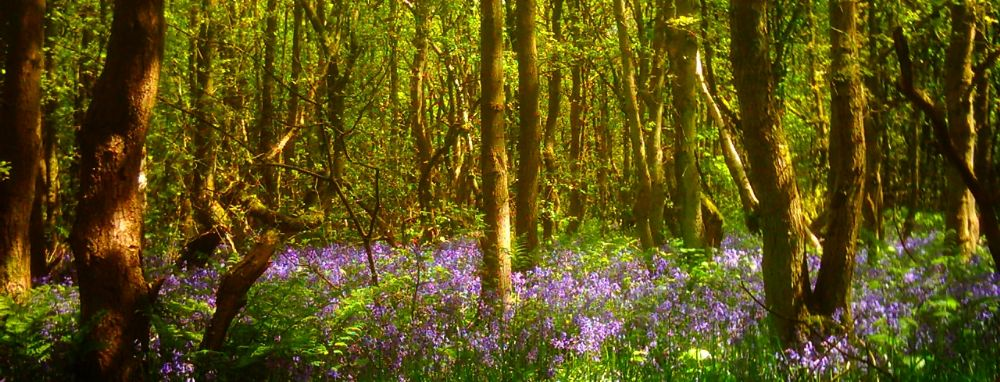 Photo in Nature #woods #nature #staffordshire #stoke on trent