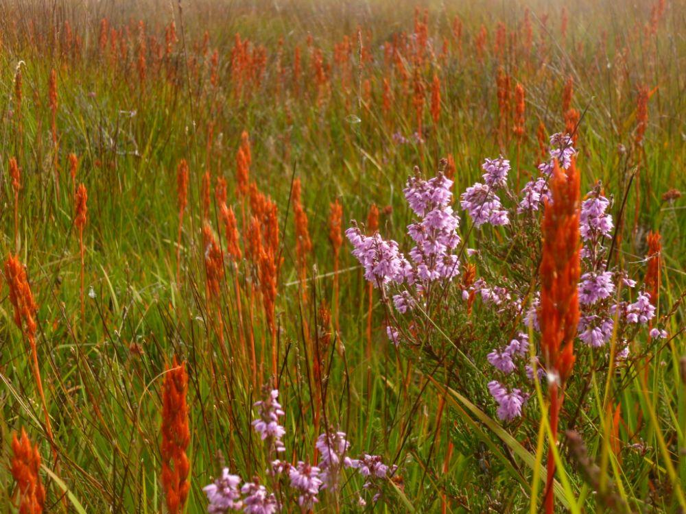 Photo in Landscape #nature #wales #ceredigion