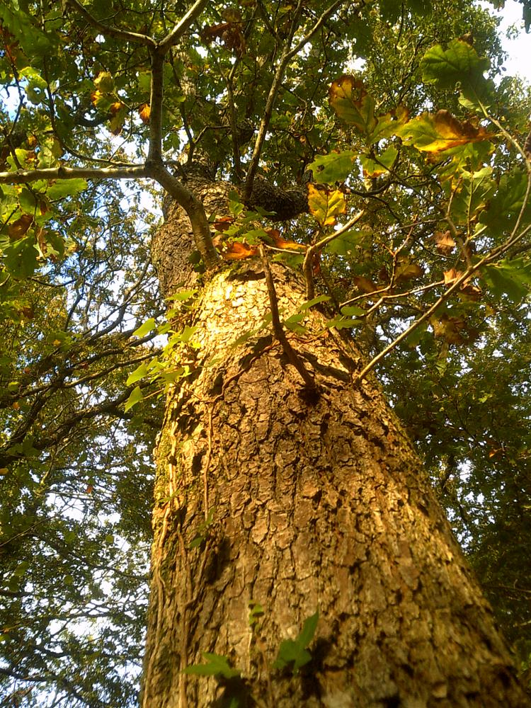 Photo in Nature #ceredigion #wales #tree #woods