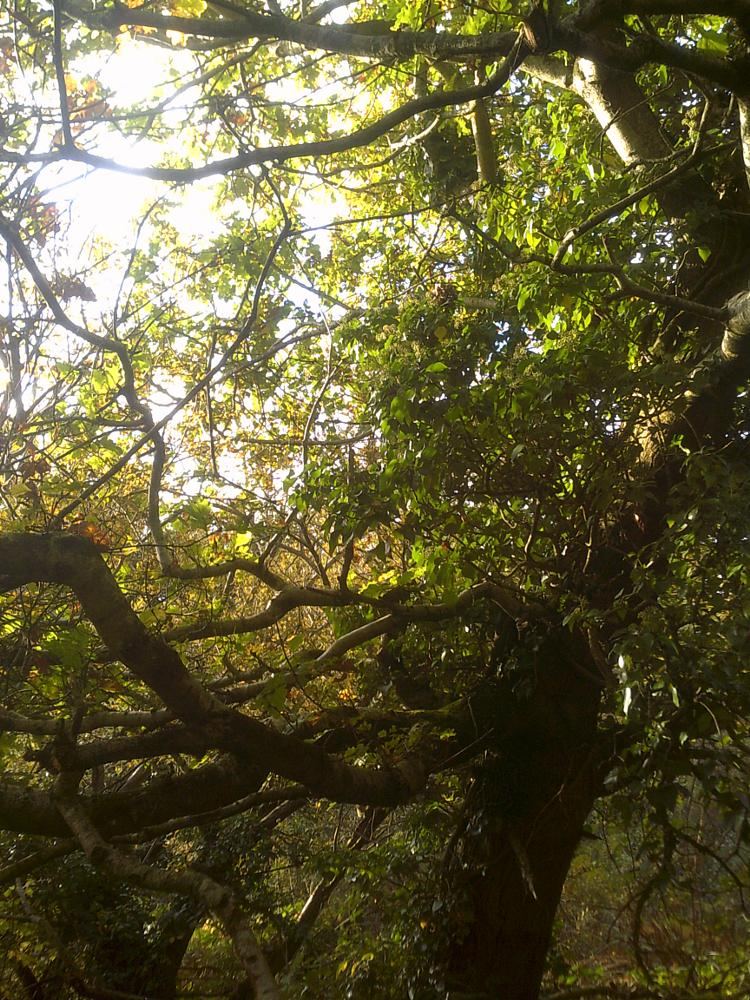 Photo in Nature #tree #woods #ceredigion #wales