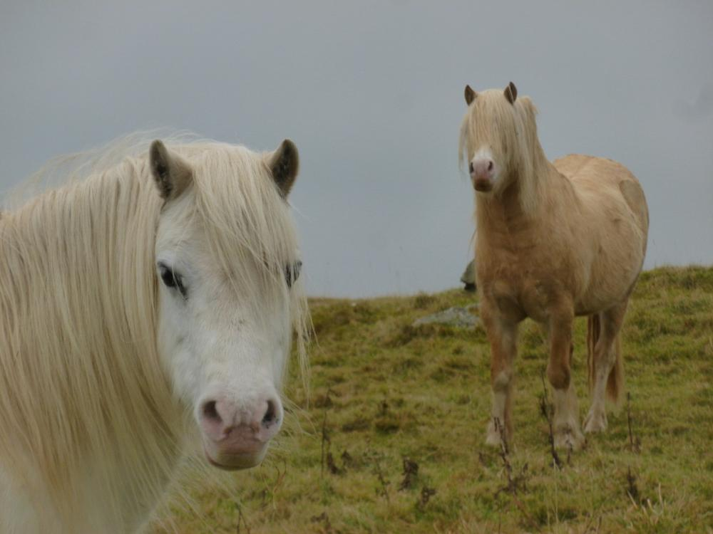 Photo in Animal #wales #ceredigion #horse #animal