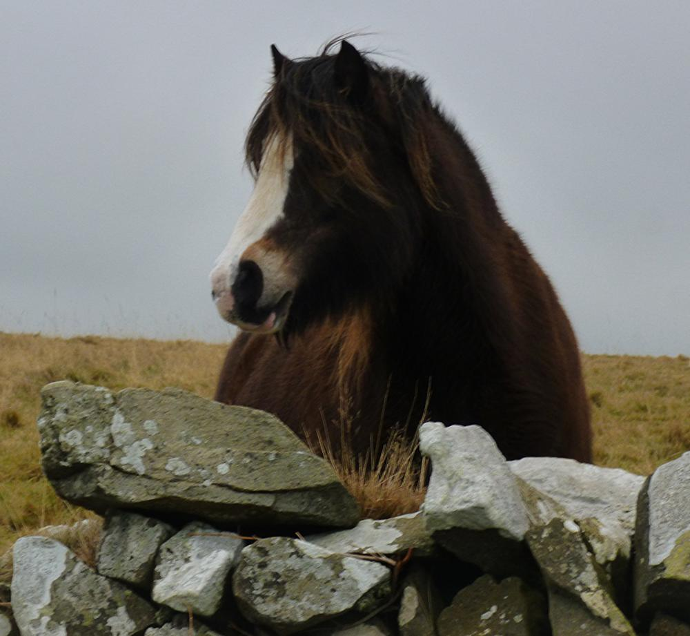 Photo in Animal #wales #horse #ceredigion