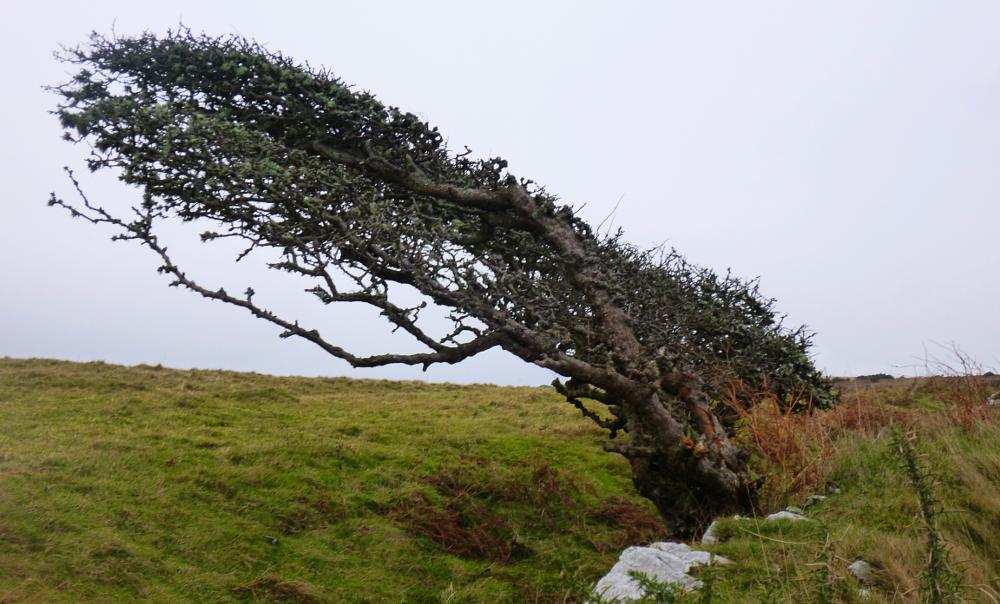 Photo in Landscape #wales #tree #ceredigion