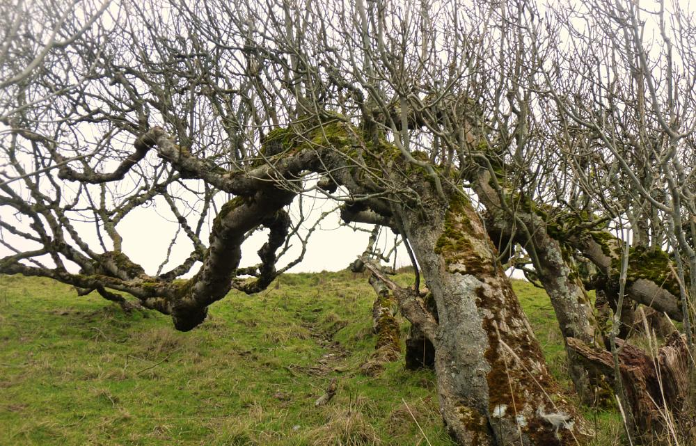 Photo in Landscape #wales #ceredigion #tree