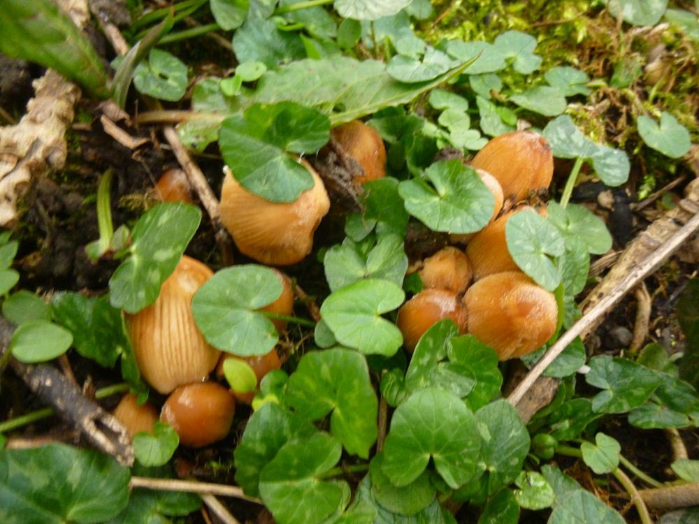 Photo in Nature #wales #fungi #ceredigion