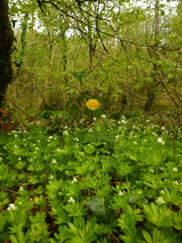 Photo in Nature #flower #woods #wales #ceredigion