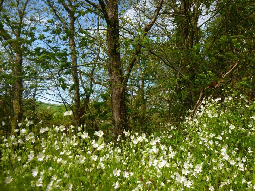 Photo in Nature #wales #ceredigion #flowers #woods