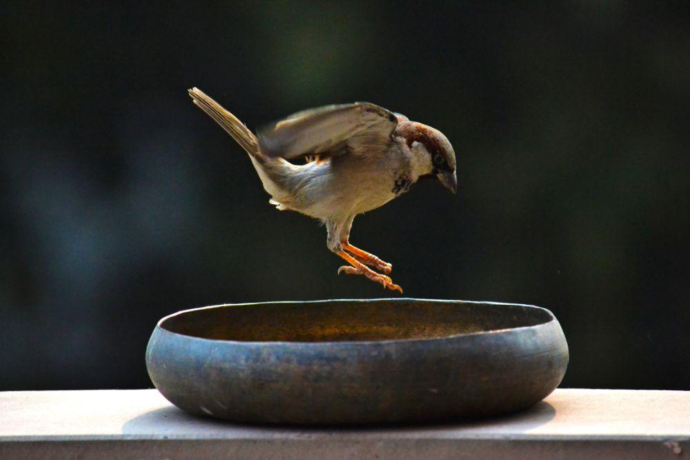 Photo in Animal #birds #sparrow #nature #landscape #beautiful #zoom #telephoto #sunny #dusk