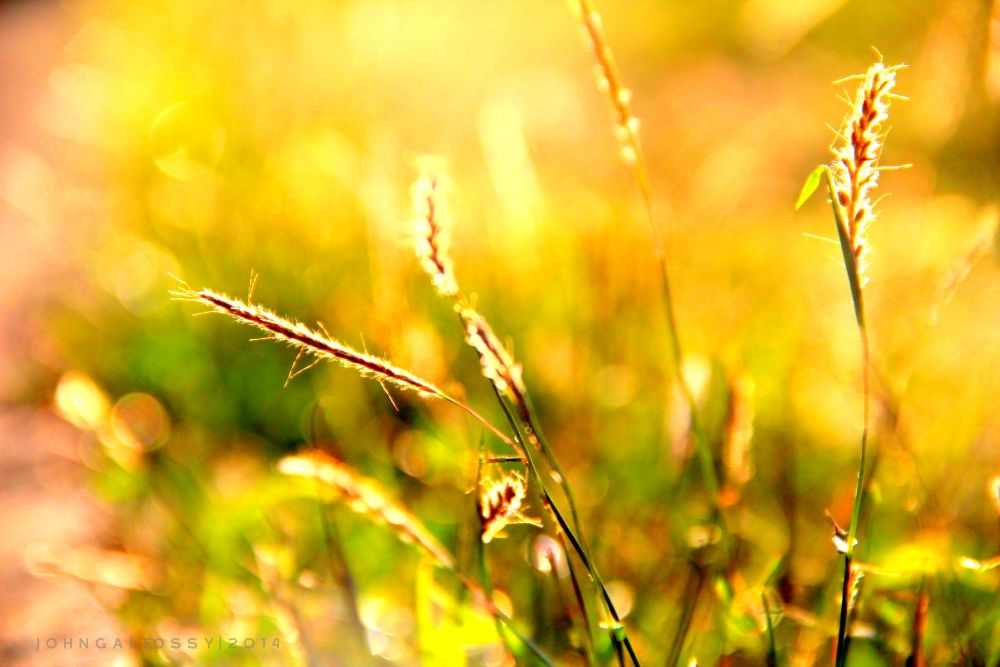 Photo in Nature #sunset #cebu #philippines #yellow #sun #nature #plants #emotion #emotion