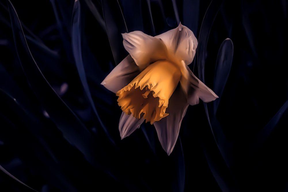 Photo in Macro #flower #macro #nature #colors #plant