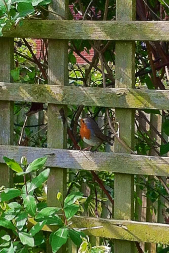Photo in Random #nature #birds #garden