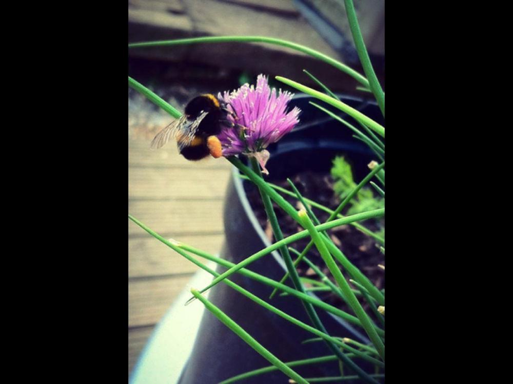 Photo in Random #bee #garden #nature #insect #sun