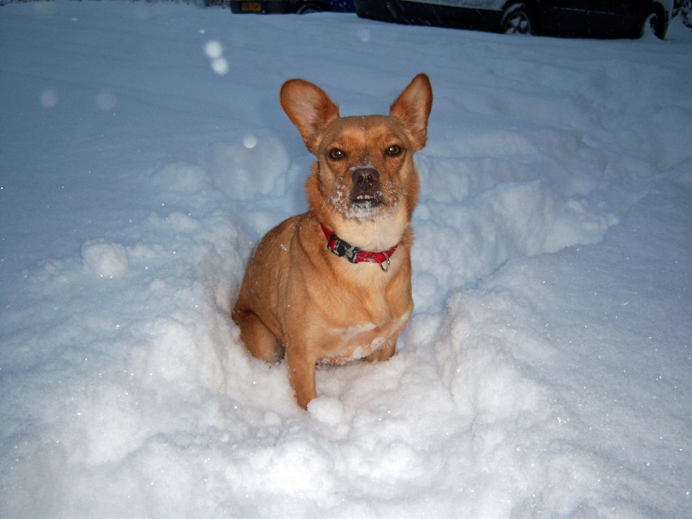Photo in Nature #dogs #nature #snow #outdoor
