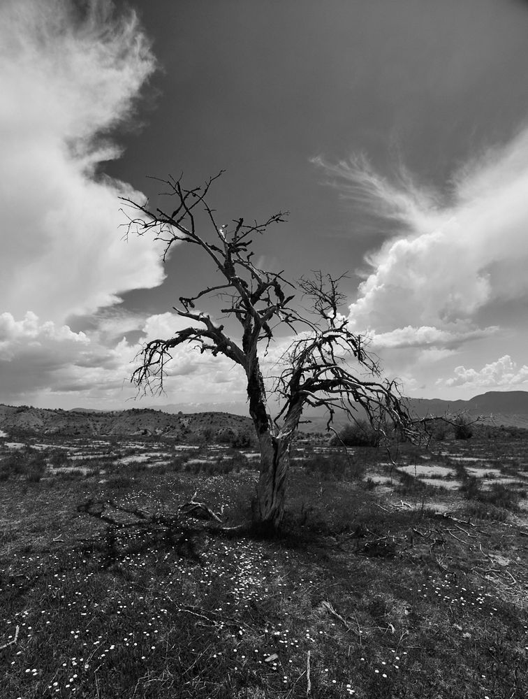 Photo in Random #tree #bnw #black and white #monochrome #greece #canon #canon6d #cloud #travel #outdoor #nature #nature foto
