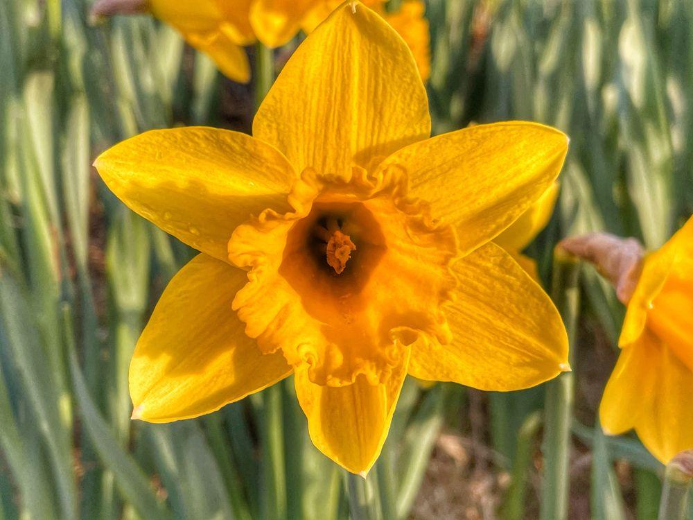 Photo in Random #spring