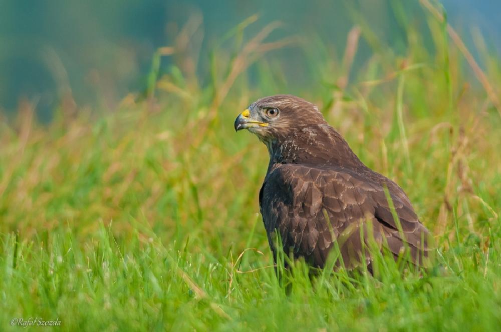 Photo in Nature #nature birds nikon d300s p