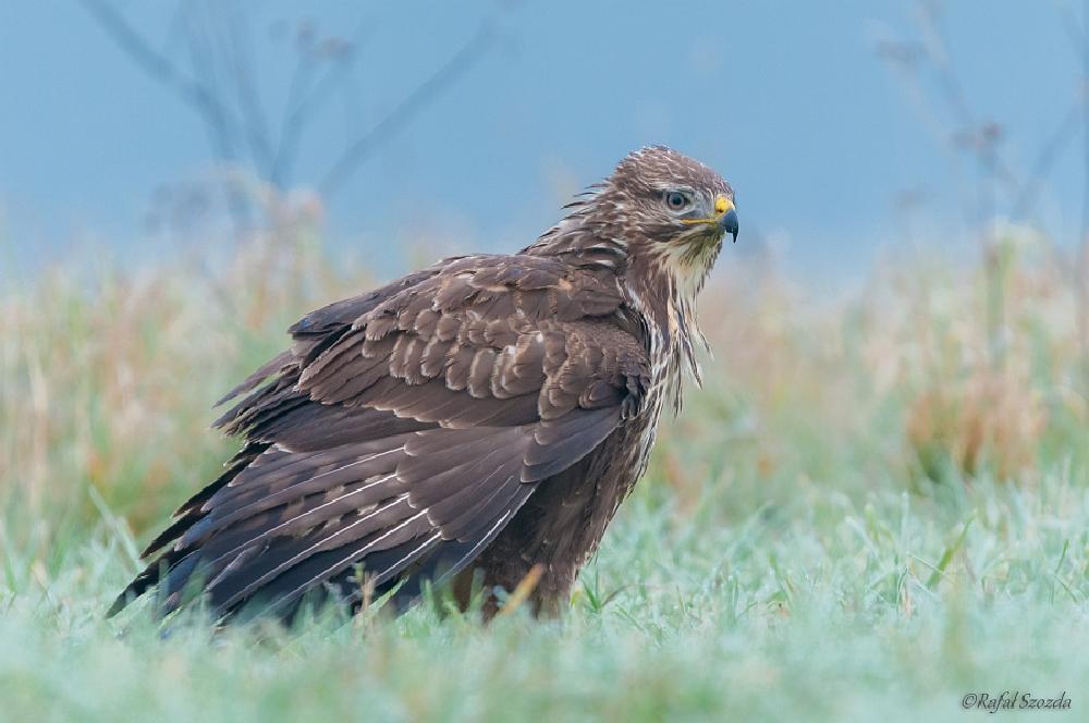 Photo in Nature #birds #nikon #nature #d300s #poland