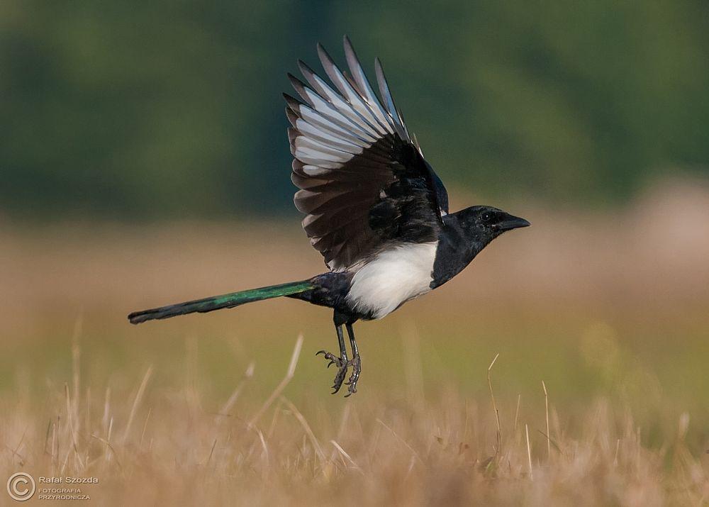 Photo in Nature #birds #nature #animals #wildlife #nikon #d300s #tamron 150-600 #poland