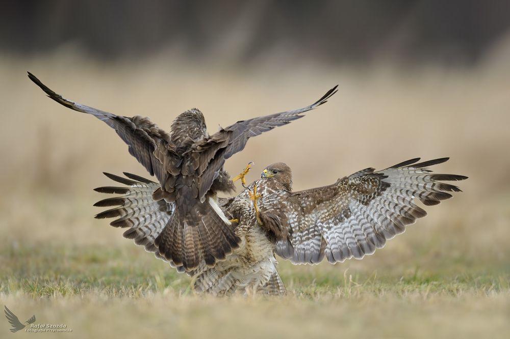 Photo in Animal #birds #nature #animals #wildlife #poland
